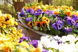 Die schönsten Blumenarrangements für Deine Vintage-Hochzeit - Blumen in Zinkwanne